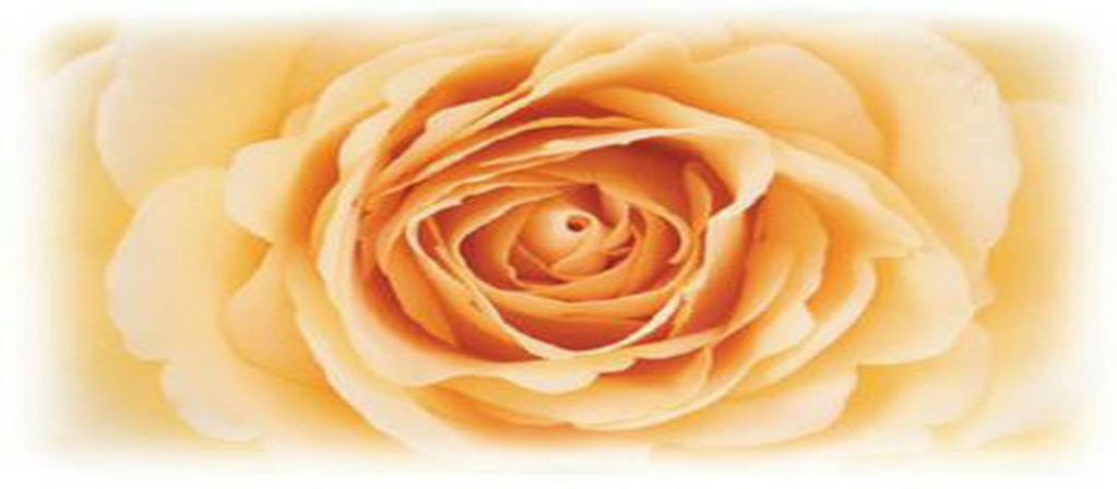 UKPTA Soft orange Rose for Polarity Heart Space